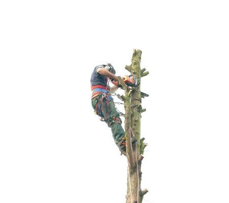 conifer-tree-removal-3
