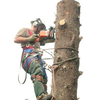 conifer-tree-removal-4