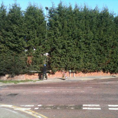 hedge-cutting-2