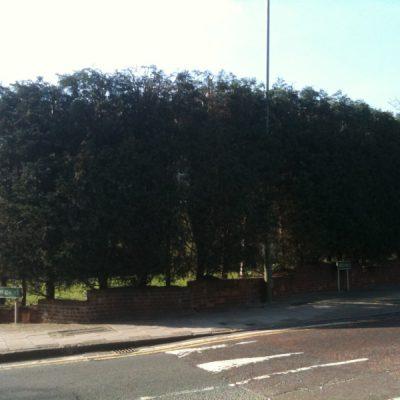 hedge-cutting-4