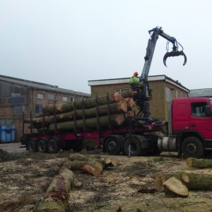 oak-tree-felling-5