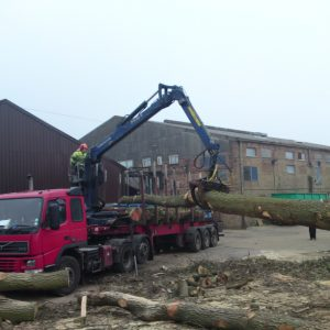 oak-tree-felling-6