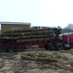 oak-tree-felling-8