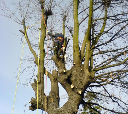 oak-tree-removal-4
