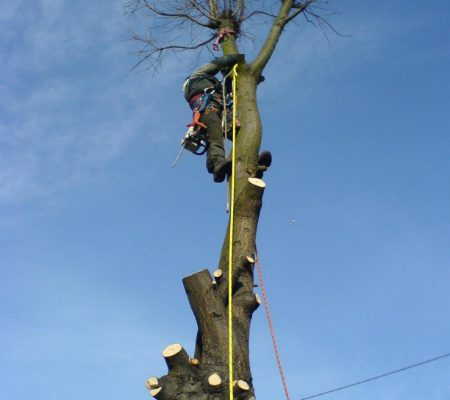oak-tree-removal-5