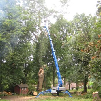 tree-removal-3