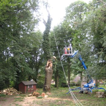 tree-removal-5